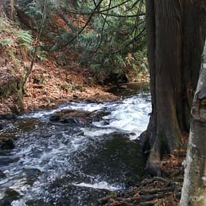 The Ultimate Guide to Hikes and Walks in Langford